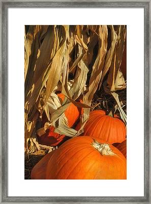 Pumpkin Harvest Framed Print by Joann Vitali