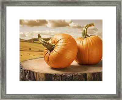 Pumpkins Framed Print by Amanda Elwell