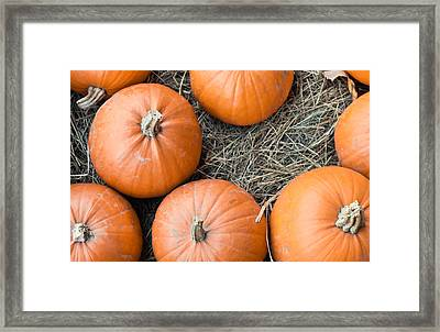 Pumpkins Framed Print by Tom Gowanlock