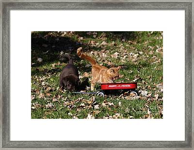 Puppy And Kitten Framed Print by Linda Freshwaters Arndt