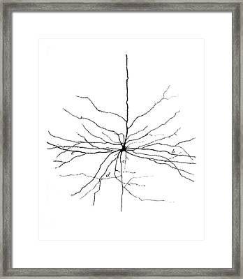 Pyramidal Cell In Cerebral Cortex, Cajal Framed Print