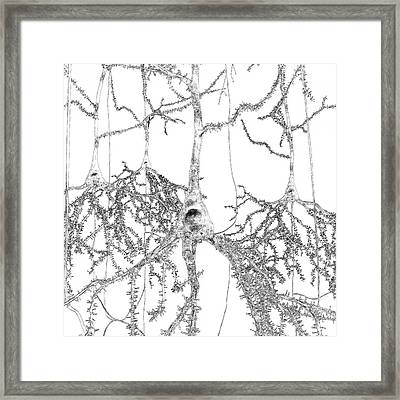 Pyramidal Nerve Cells Framed Print by Russell Kightley