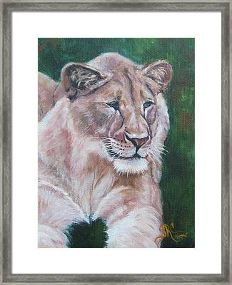 Queen Of The Beast,lioness Framed Print