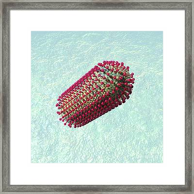 Rabies Virus Particle, Artwork Framed Print by Russell Kightley