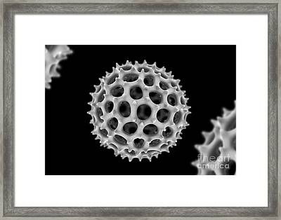 Radiolarian Skeleton, Artwork Framed Print