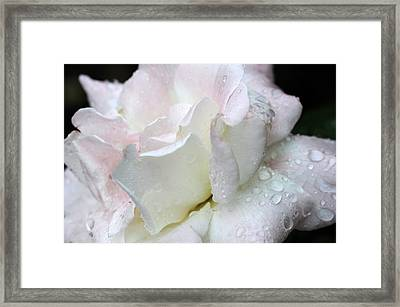Rain Washed Framed Print