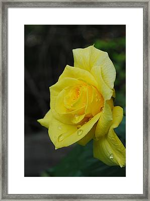 Raindrops On Roses Framed Print by Robert  Moss