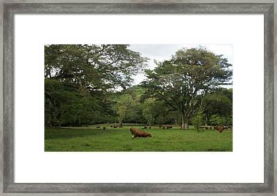 Rainforest At Ys River Framed Print by Olaf Christian