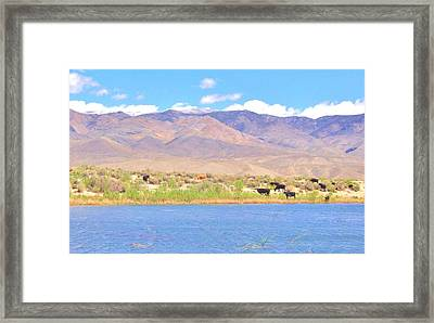 Range Cattle Framed Print by Marilyn Diaz