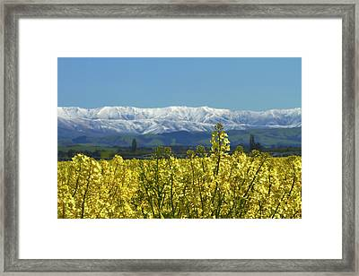 Rapeseed Field, Near Timaru, South Framed Print by David Wall