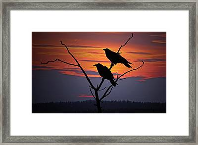 2 Ravens Framed Print by Ron Day