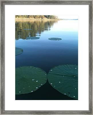 Rayburn Lilly Pads Framed Print