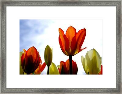 Framed Print featuring the photograph Reaching For The Sun by Marilyn Wilson