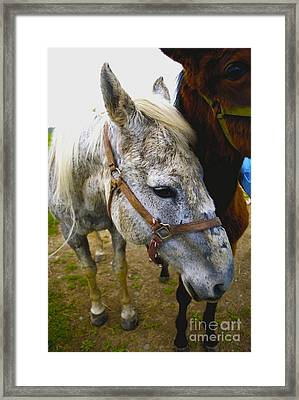 Ready To Go Framed Print by Linda Simon
