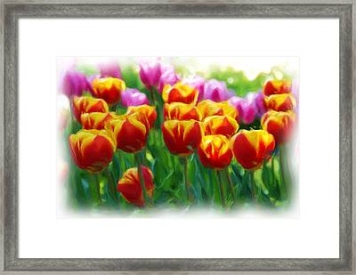Red And Yellow Tulips Framed Print by Allen Beatty