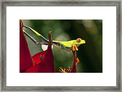 Framed Print featuring the photograph Red Eyed Tree Frog 1 by Jialin Nie Cox WorldViews