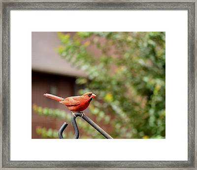 Red Framed Print by Larry Bishop