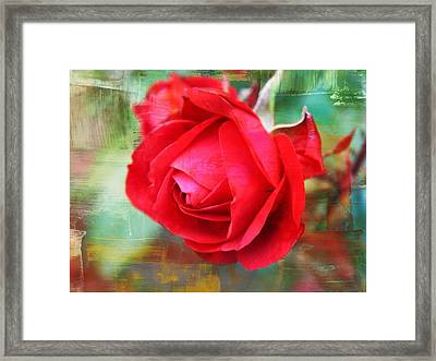 Red Rose Framed Print by Cathie Tyler