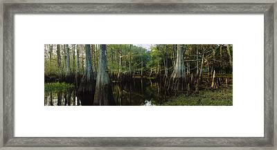 Reflection Of Trees In Water Framed Print