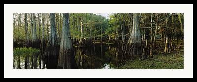 Fisheating Creek Framed Prints