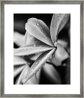 Framed Print featuring the photograph Reflection by Sharon Jones