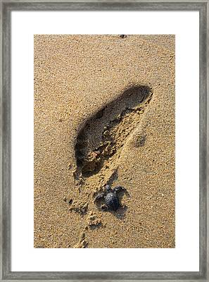 Releasing Green Sea Turtle, Hotelito Framed Print