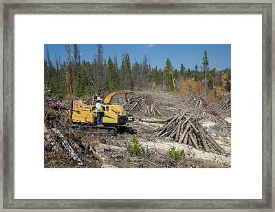 Removing Dead Trees Framed Print by Jim West