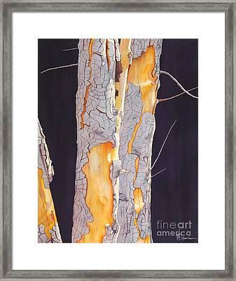 River Birch At Lynx Framed Print
