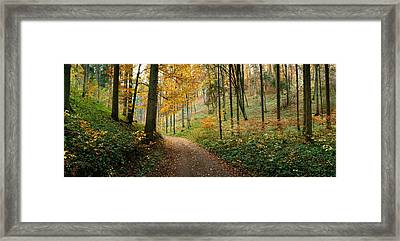 Road Passing Through A Forest Framed Print by Panoramic Images