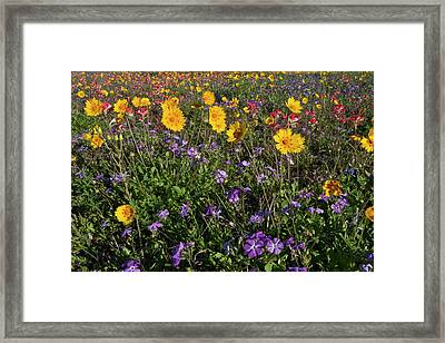 Roadside Wildflowers In Texas, Spring Framed Print by Larry Ditto