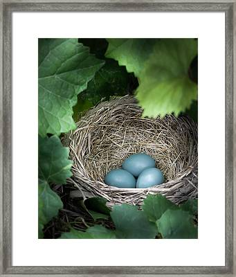 Robin Egg Blues Framed Print