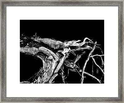 Framed Print featuring the photograph Roots 1 by Amar Sheow