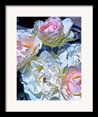 Pamela Cooper Framed Prints