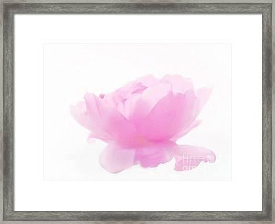 Rose Framed Print by Sylvia  Niklasson