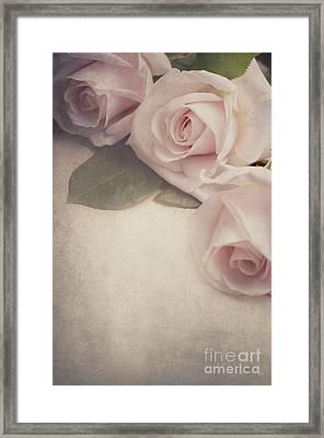 Roses Framed Print by Jelena Jovanovic