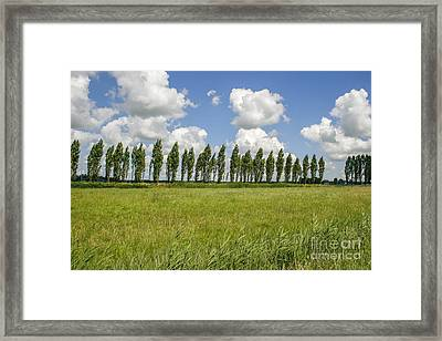 Row Of Trees In The Wind Framed Print