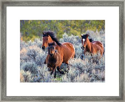Running Free Framed Print by Mike Dawson
