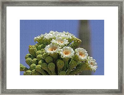 Saguaro Flower And Buds  Framed Print