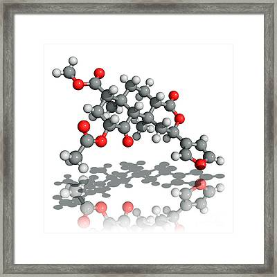 Salvinorin A Drug Molecule Framed Print by Laguna Design