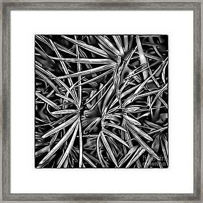 Saw Palmetto Framed Print by Walt Foegelle