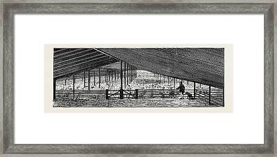 Scene At An Australian Sheep Station, Collaroy Framed Print by Australian School
