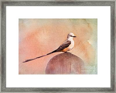 Scissor-tailed Flycatcher Framed Print by Betty LaRue