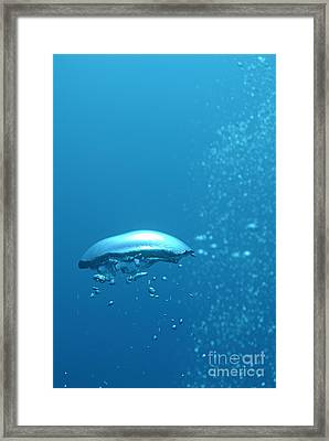 Scuba Diver's Bubbles Rising-up To Surface Framed Print by Sami Sarkis