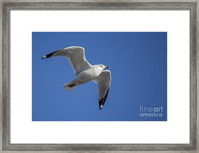 Sea Gull Framed Print by Twenty Two North Photography