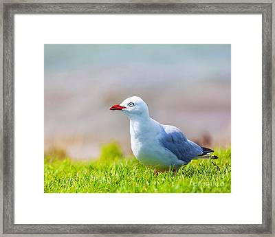 Seagull Framed Print by MotHaiBaPhoto Prints