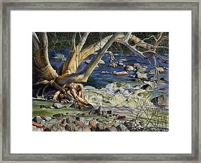 Sedona Dry Beaver Creek Sycamore Framed Print