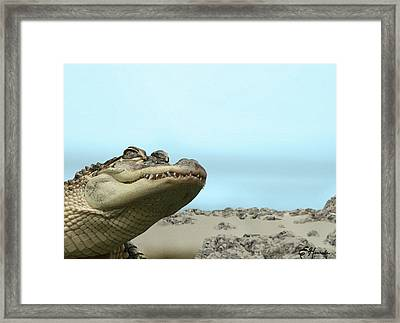 See You Later Alligator Framed Print by Ellen Henneke