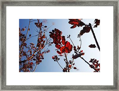 Shadows Framed Print by Lucy D