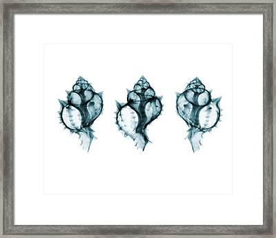 Shells Framed Print by Brendan Fitzpatrick