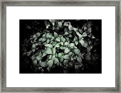 Shrub Detail Framed Print